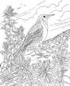 chickadee  white pine cone maine state bird  flower coloring page  printable