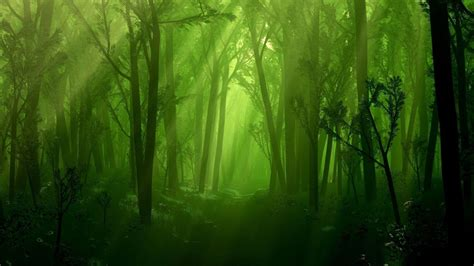 Download hd forest wallpapers best collection. Dark Forest Wallpapers - Wallpaper Cave