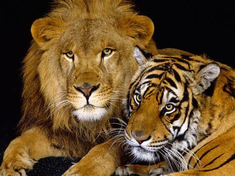 animals love  animals wallpapers