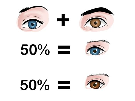 baby eye color how to predict your baby s eye color 12 steps with pictures