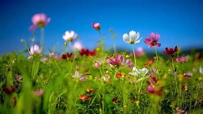 Spring Screensavers Desktop Background Wallpapers Wildflowers