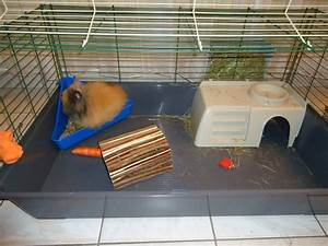 Maison Pour Lapin : maison pour cage lapin images ~ Premium-room.com Idées de Décoration