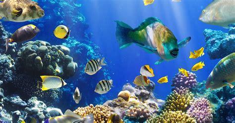 banco de imagenes gratis peces de colores en el fondo