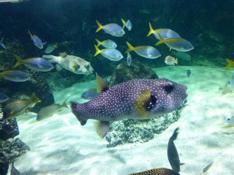 aquarium la rochelle reduction aquarium la rochelle top tips before you go tripadvisor