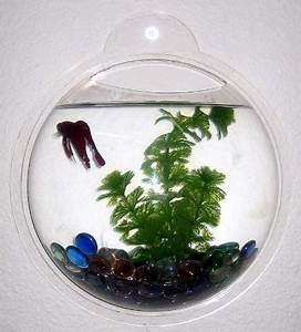 19 best images about Cool fish and fish tanks on Pinterest ...