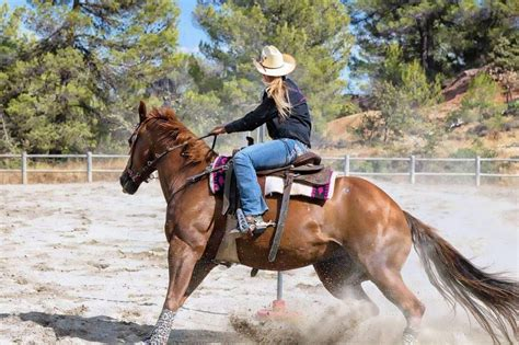 horse fastest breeds rode quarter history behind equestrian breed horses events horsewoman excited phrase barrel