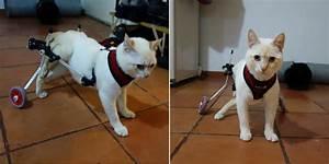 Paralyzed Kitten Walks Again Thanks To A 3d Printed Wheelchair