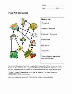 Food Web Diagrams