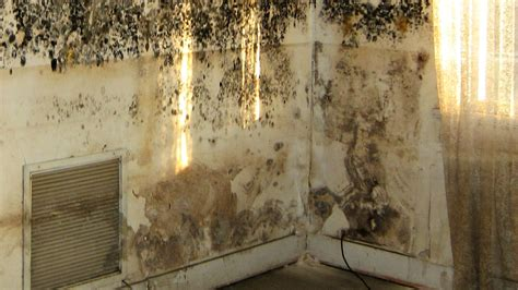 Removing Black Mold From Shower how to remove mold from walls housewife how to s 174