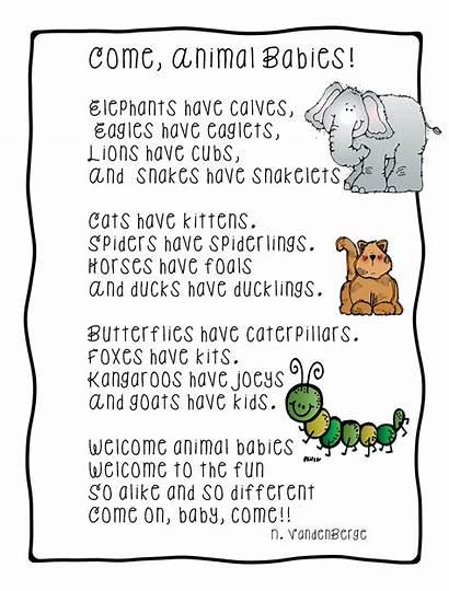 Animal Animals Grade Short Poems Babies Songs