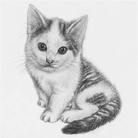 kitten drawing  jeroenpaint  deviantart