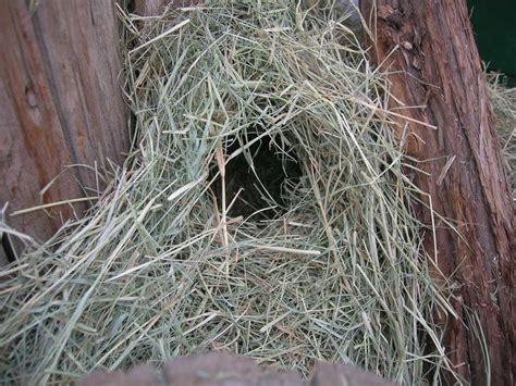 housing and feeding your quail backyard chickens community
