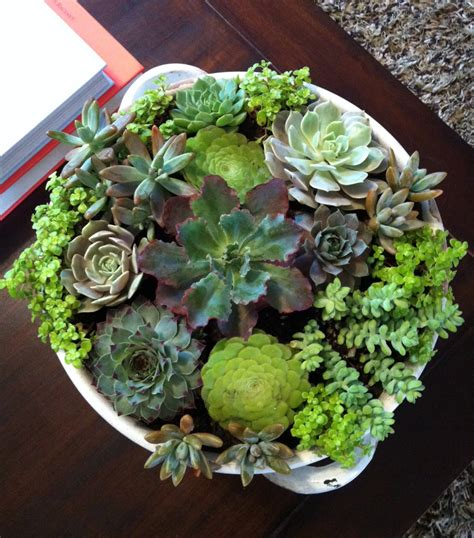 potting succulents indoors best 25 indoor succulent garden ideas on pinterest indoor succulents potting succulents diy
