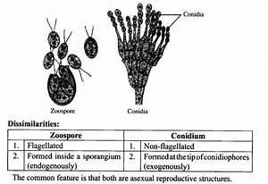 Ncert Exemplar Problems Class 12 Biology Reproduction In