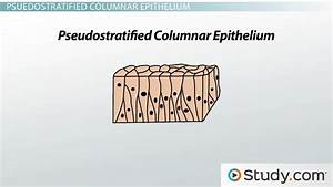 What Is Epithelial Tissue