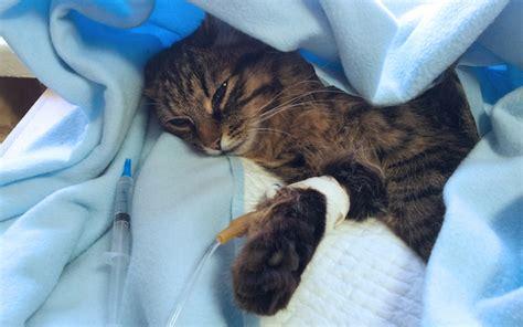 Just Cats Veterinary Hospital Contact Us  Autos Post