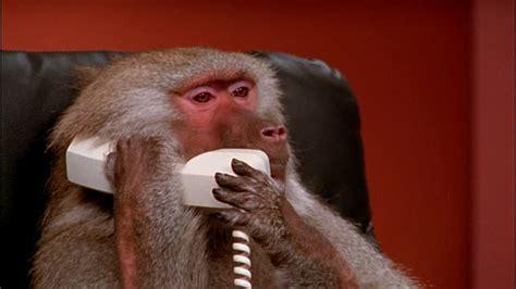 Baboon Meme - baboon phone blank template imgflip