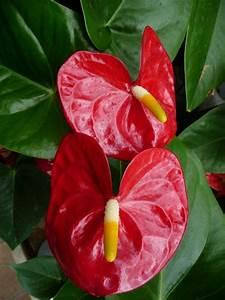 Plante D Intérieur : plante d polluante plante verte d 39 int rieur d polluante ~ Dode.kayakingforconservation.com Idées de Décoration