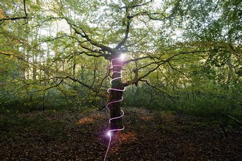 outdoor lighting for trees low voltage how to wrap trees with outdoor lights