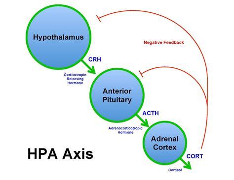 filebrian  sweis hpa axis diagram  wikimedia