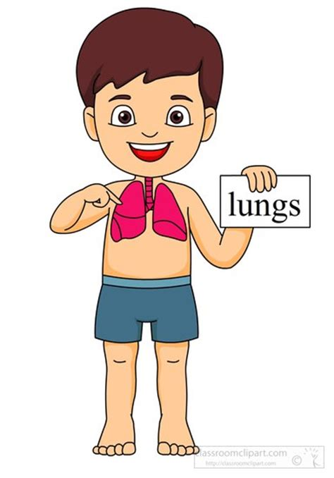 Lungs Clipart Lungs Clipart Clipground