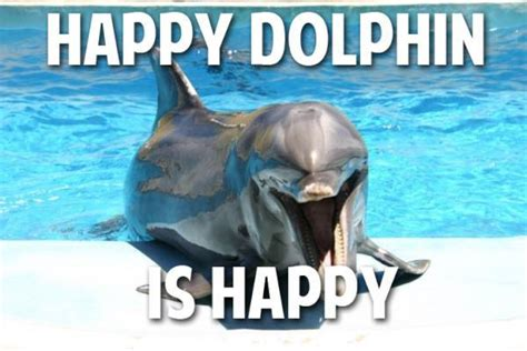 Dolphin Memes - cute dolphin happy lol image 254427 on favim com