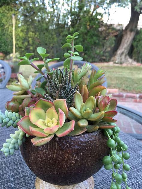 22 Best Images About Succulents On Pinterest Succulent