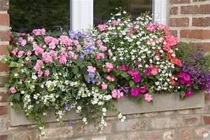 Comment Remplir Une Grande Jardinière : les associations viter en jardini res ~ Melissatoandfro.com Idées de Décoration
