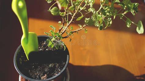 piante da davanzale giardino terrazzo con le piante di pot fotografia