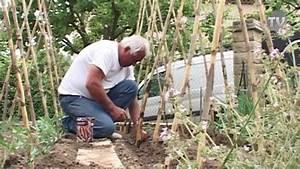 Comment Tuteurer Les Tomates : plantation des haricots rames youtube ~ Melissatoandfro.com Idées de Décoration