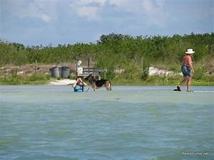 honeymoon island florida beaches With honeymoon island dog beach