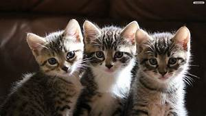 Cats wallpaper ·① Download free HD Wallpapers of Cats for ...