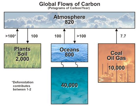 Define Carbon Sink Geography by What Is The Carbon Cycle What Is The Science It