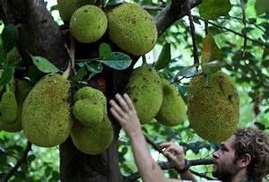 Project Bona Fide: The Jackfruit Manifesto