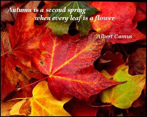 20 Cool Collection Autumn Quotes  Quotes Hunger