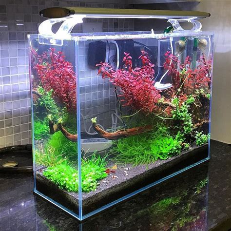 shrimp tank aquascape 445 best images about aquascaping on tropical