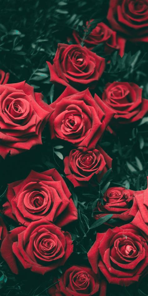 free flower aesthetic wallpapers top