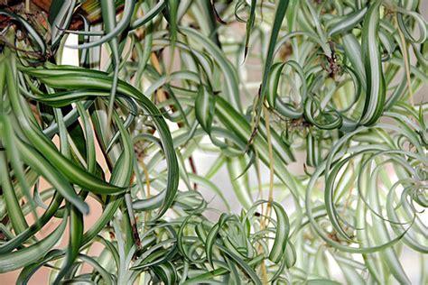 topliste diese fuenf pflanzen reinigen die luft energieleben