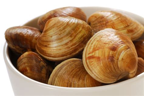 types of clams 20 types of clams you ve probably never seen before