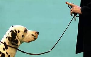 Santa Cruz Puppy and Dog Group Training Schedule Giovannas Dog Training in Santa Cruz