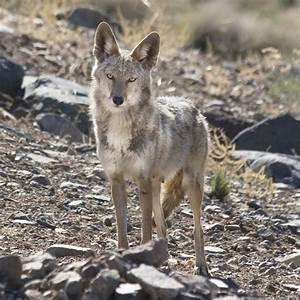 15 Photos Of Nevada Wildlife