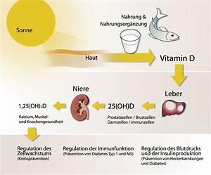 Vitamin D Dosis Berechnen : schadet die sonne der gesundheit sonnenexperten ~ Themetempest.com Abrechnung