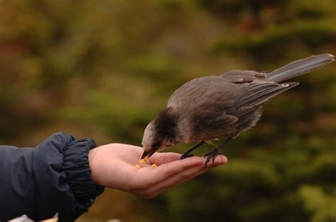 interesting bits about birds welcome wildlife