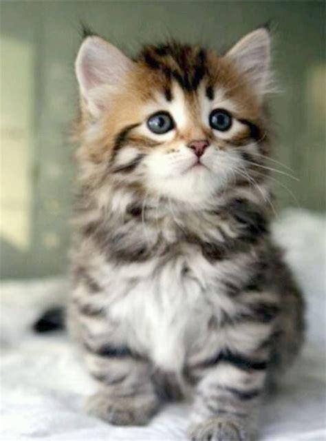 cute kittens playing cute cats  kittens wallpaper hd