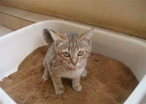 Laver Un Chaton : 6 conseils pour apprendre votre chat faire ses besoins ~ Nature-et-papiers.com Idées de Décoration