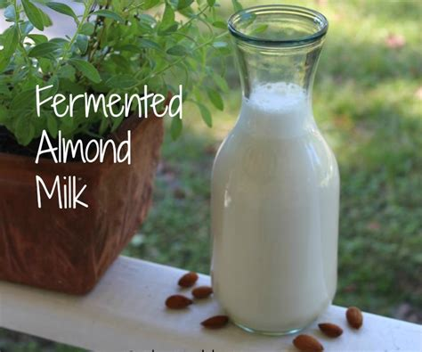 homemade fermented almond milk  healthy home economist
