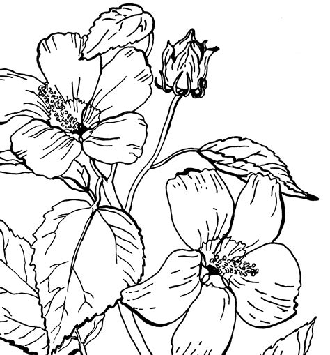 Kleurplaat Petunia by Free Roses Printable Coloring Page The Graphics