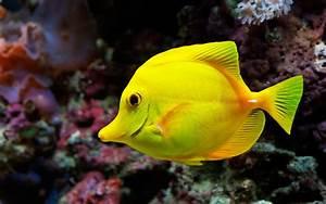 Beautiful Fish Pictures & Wallpaper