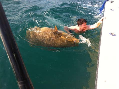 florida naples grouper monster goliath