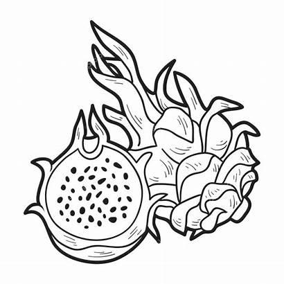 Buah Sketsa Naga Gambar Mewarnai Fruit Dragon